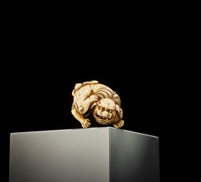 A POWERFUL IVORY NETSUKE OF A RECLINING SHISHI