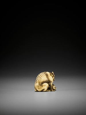 Lot 52 - TOMOTADA: A FINE IVORY NETSUKE OF A WOLF WITH HAUNCH OF VENISON