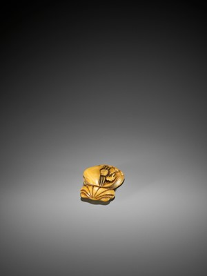 Lot 6 - AN EARLY IVORY NETSUKE OF A HERMIT CRAB AND SHELLS