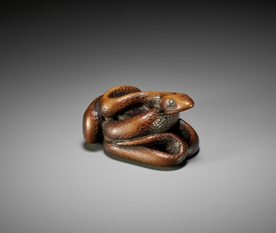 Lot 39 - A LARGE AND POWERFUL WOOD NETSUKE OF A COILED SNAKE